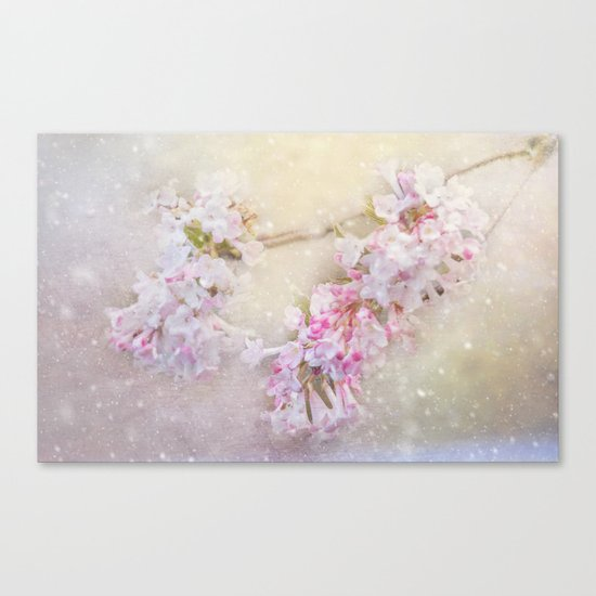snowy pink blossom Canvas Print