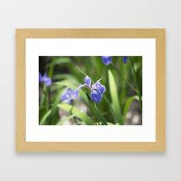 Longwood Gardens - Spring Series 234 Framed Art Print