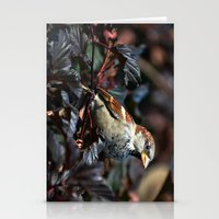 sparrow Stationery Cards featuring Sparrow by Elaine C Manley