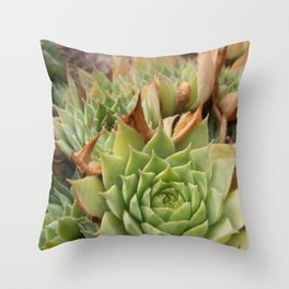 Hens and Chicks Plant Throw Pillow