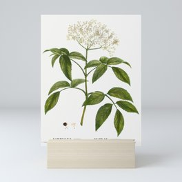 Elder (Sambucus nigra) from Traite des Arbres et Arbustes que lon cultive en France en pleine terre Mini Art Print