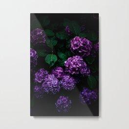 Hydrangea 01 Metal Print
