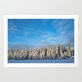 Spruce After Snow Storm Color Art Print