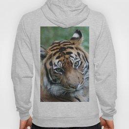 Tiger 002 Hoody