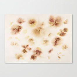 Gladiolas, Come Into Bloom Canvas Print