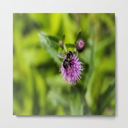 A Bee on a Purple Flower Metal Print