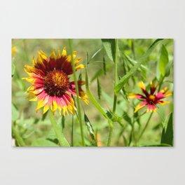 Sunbathing Wildflower Canvas Print