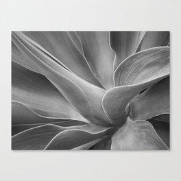 Mono Agave Attenuata Canvas Print