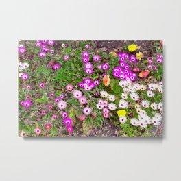 Mesembryanthemum Metal Print
