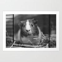 guinea pig Art Prints featuring guinea pig by ihavenonameandadress