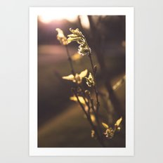 The First Sign of Spring Art Print