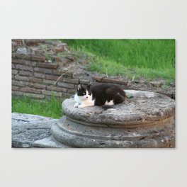 Archaeologist Cat Resting on a Roman Column Canvas Print