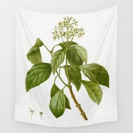 Climbing hydrangea Decumaria barbara from Traite des Arbres et Arbustes que lon cultive en France en Wall Tapestry
