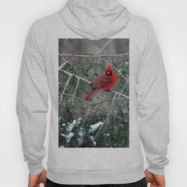 Winter Cardinal Hoody