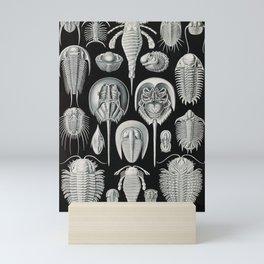 Ernst Haeckel Horseshoe Crab Vintage Illustration Mini Art Print