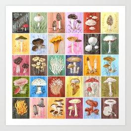 Mushroom Study Art Print