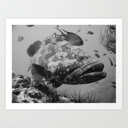 Grouper Art Print