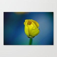 Budding Buttercup  Canvas Print