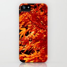AUTUMN LEAVES - RED MAPLE iPhone Case
