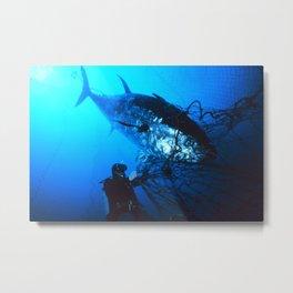 Giant Bluefin Tuna Caught in a Net  Metal Print