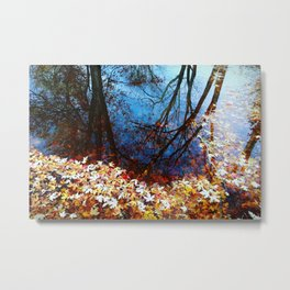 Maple leaves float on water, Autumn, fall, reflection, nature Metal Print