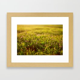 Clover and the Golden Hour Framed Art Print