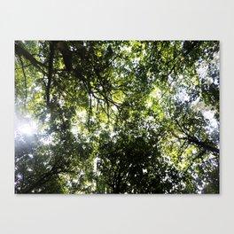 Tree Canopy Canvas Print