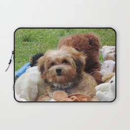 Copper the Havapookie as a Puppy Laptop Sleeve