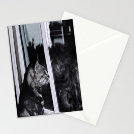 Cat Reflection And The Snapped Menace  Stationery Cards