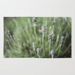 Lavendels Rug