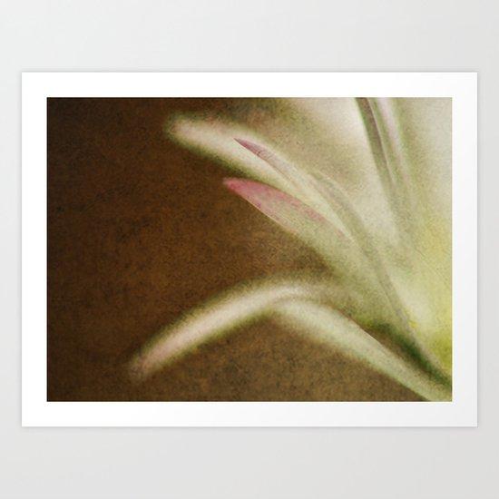 Petals Abstract Art Print
