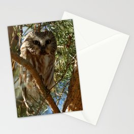 Perched Northern Saw-Whet Owl Stationery Cards
