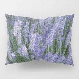 Lavender Fields Forever Pillow Sham