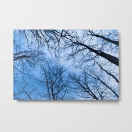 Naked trees tops, blue sky Metal Print