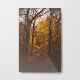 TREES in Western North Carolina Metal Print