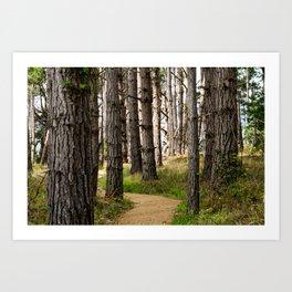 Path to the Sea (Point Lobos) Art Print