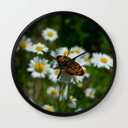butterfly in the daisies Wall Clock