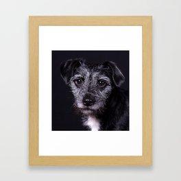 Pop the Dog Framed Art Print
