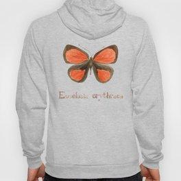 Butterfly - Euselasia erythraea Hoody