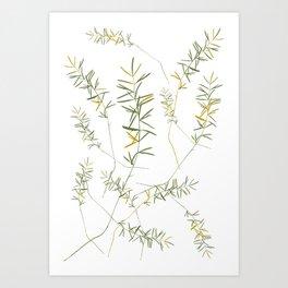 fern leafs pattern Art Print