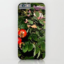 Rose Hips by the Sea, at Sunset (Wild Fresh, Bright and Ripe) iPhone Case
