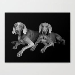 TWO WEIMARANERS Canvas Print