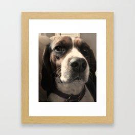 Beagle Love Framed Art Print