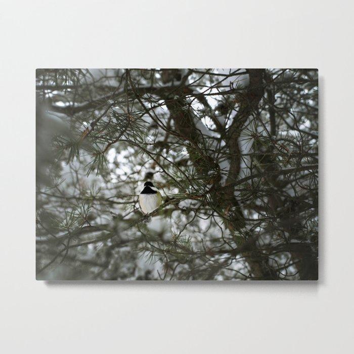 Snow 1 Metal Print