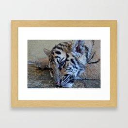 Tiger Baby Framed Art Print
