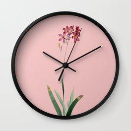Vintage Corn Lily Botanical Illustration on Pink Wall Clock