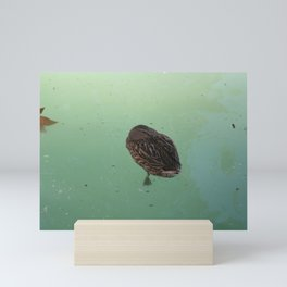 Peaceful Afternoon Siesta - duck napping on the water Mini Art Print