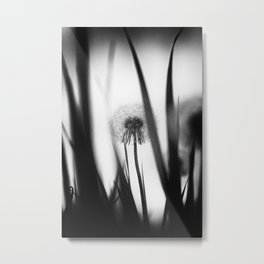 Black and White Dandelion Photography Metal Print