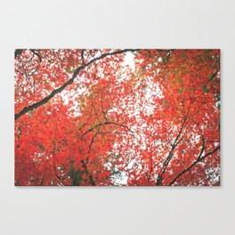 The Grotto Canvas Print