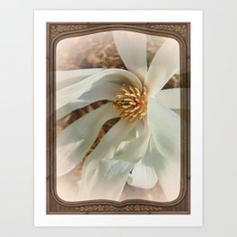 Springtime Magnolia Art Print